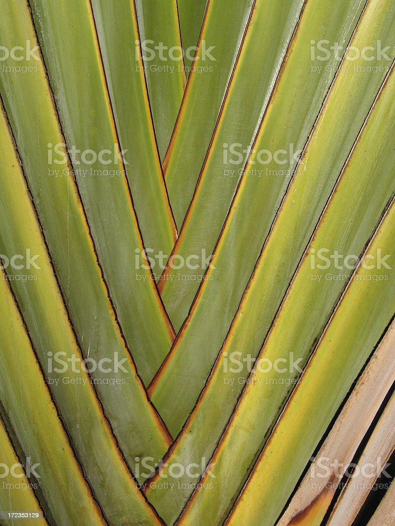 Palm Patterns royalty-free stock photo