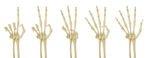 palm - skelett hand stock-fotos und bilder