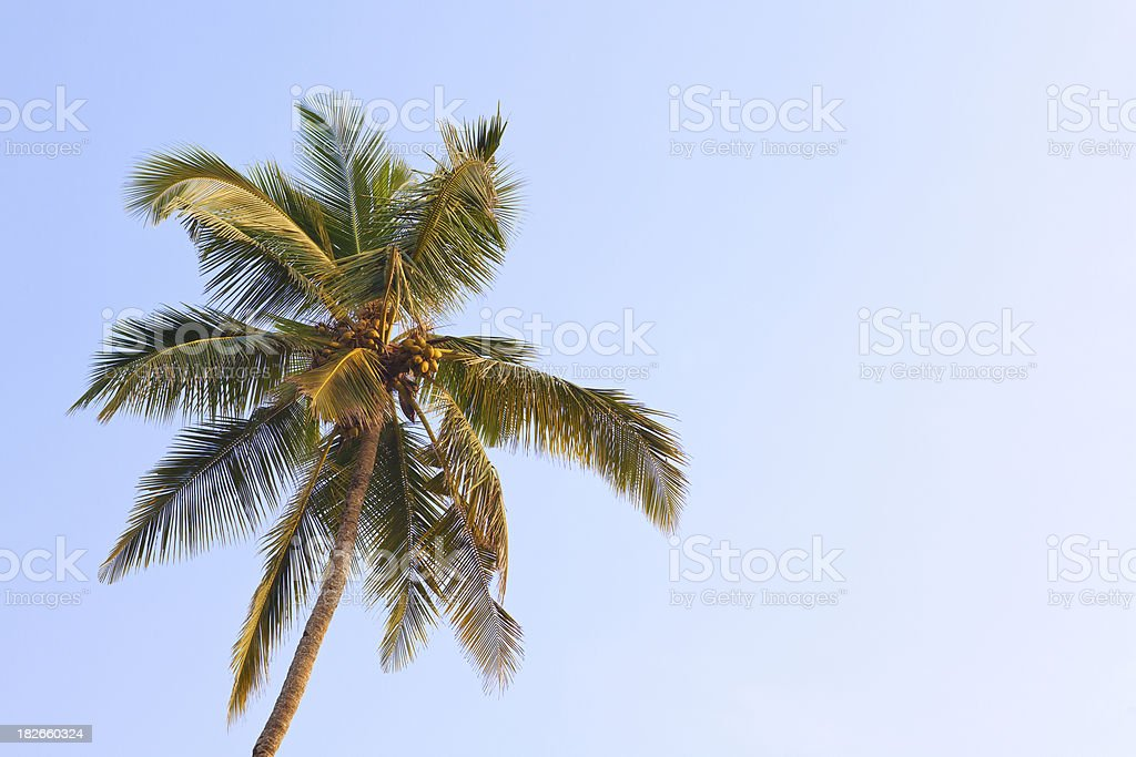 Palm royalty-free stock photo