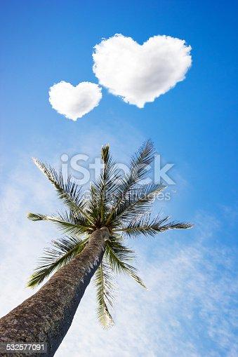istock Palm 532577091