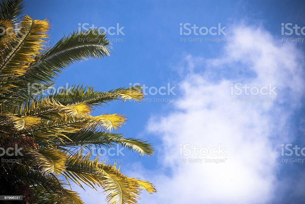 palm royalty free stockfoto