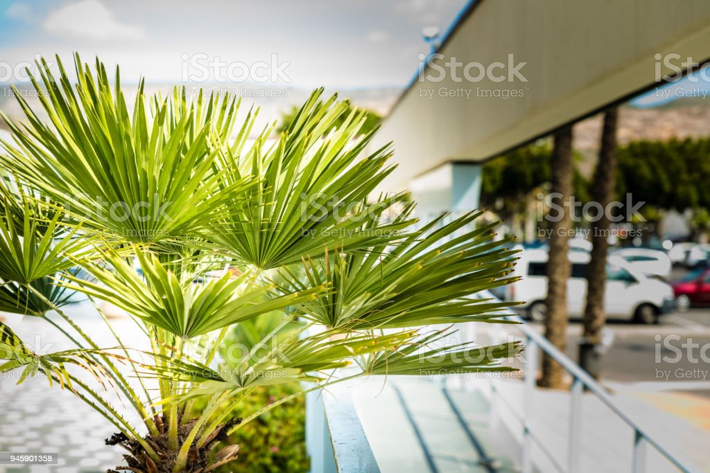 palm plants fresh stock photo