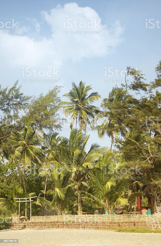 Palm resort foto stock royalty-free