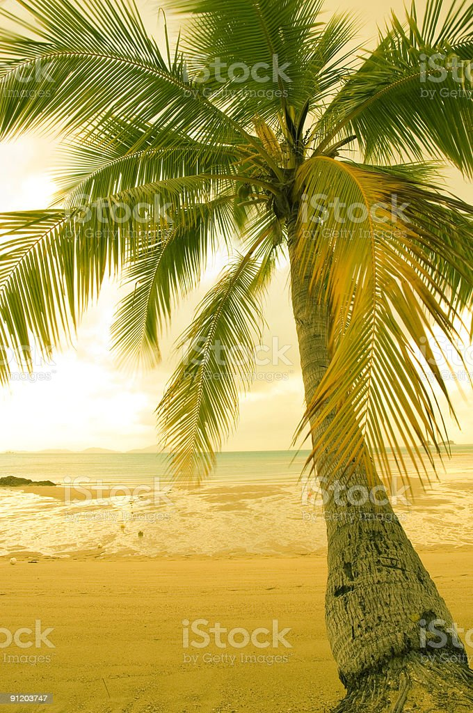 Palm Sands stock photo