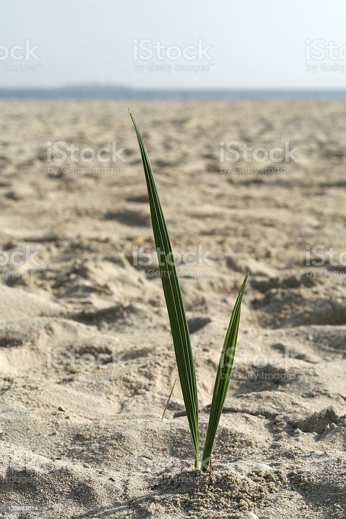 palm seedling royalty-free stock photo