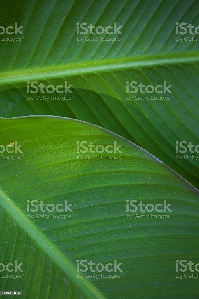 Palm Shadows royalty-free stock photo