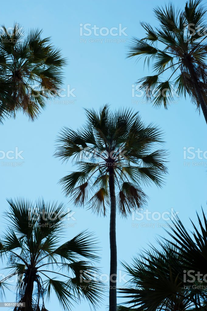 Palm Silhouette Against A Blue Sky stock photo