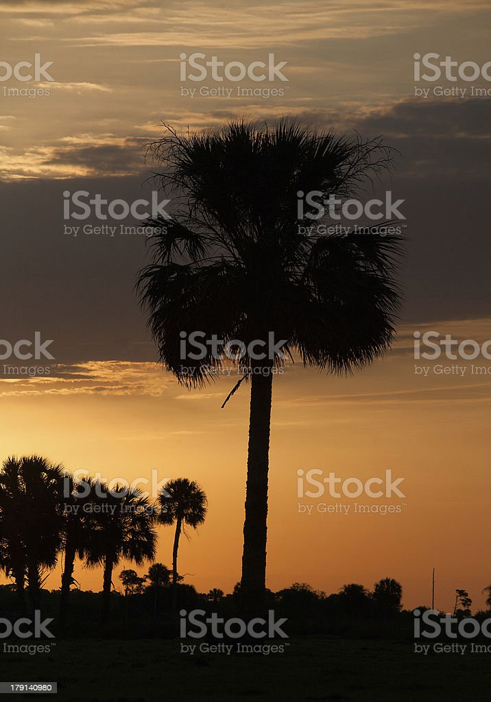 Palm silhouette royalty-free stock photo