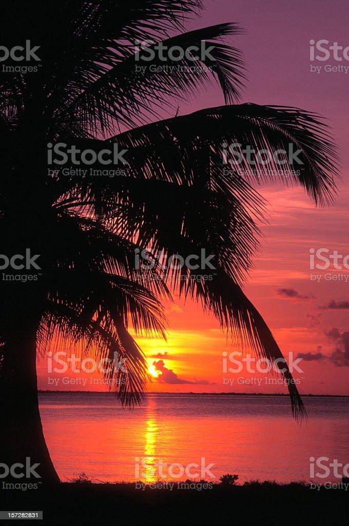 Palm Silo royalty-free stock photo