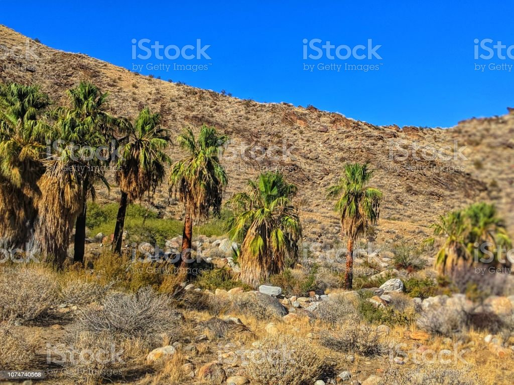 Palm Springs California Indian Canyon royalty-free stock photo
