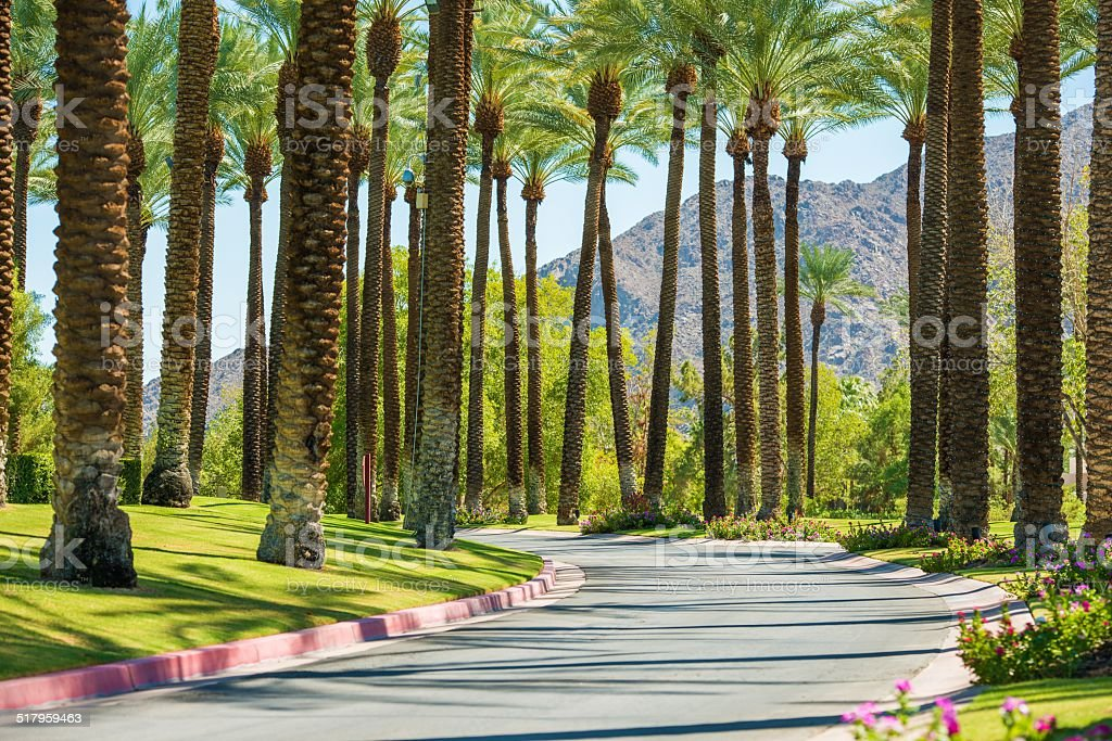 Palm Springs Road stock photo