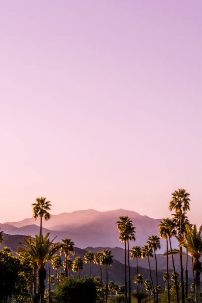 palm springs natursköna san jacinto bergslandskap - pink sunrise bildbanksfoton och bilder