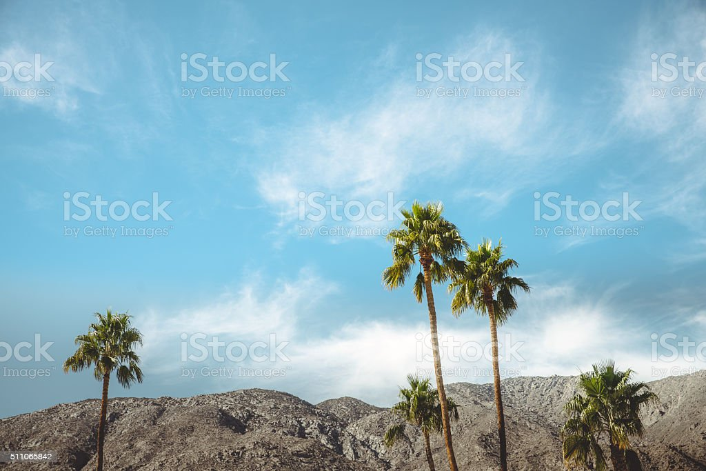 Palm Springs Vintage Movie Colony Palm Trees and Mountains stock photo