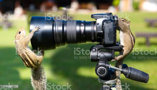 Photo of Palm squirrels staged a photo shoot.