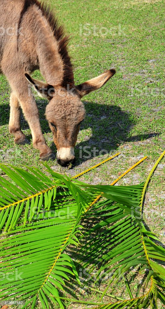 Palm Sunday Triumphal Entry royalty-free stock photo