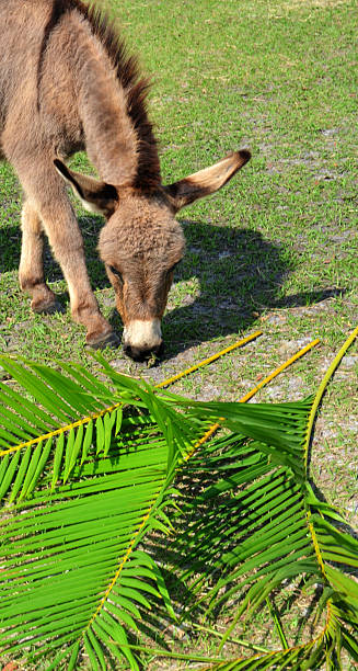 Palm Sunday Triumphal Entry stock photo