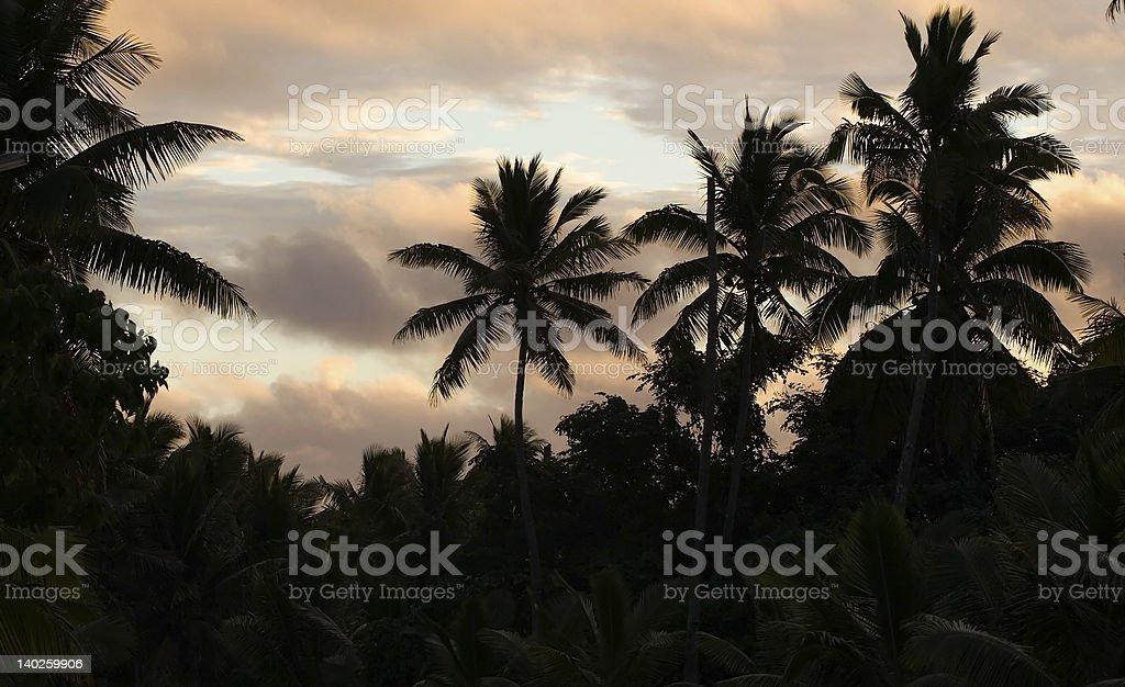 Palm sunset stock photo