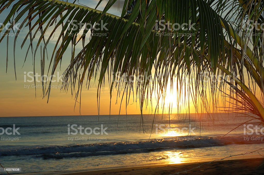 Palm sunset royalty-free stock photo