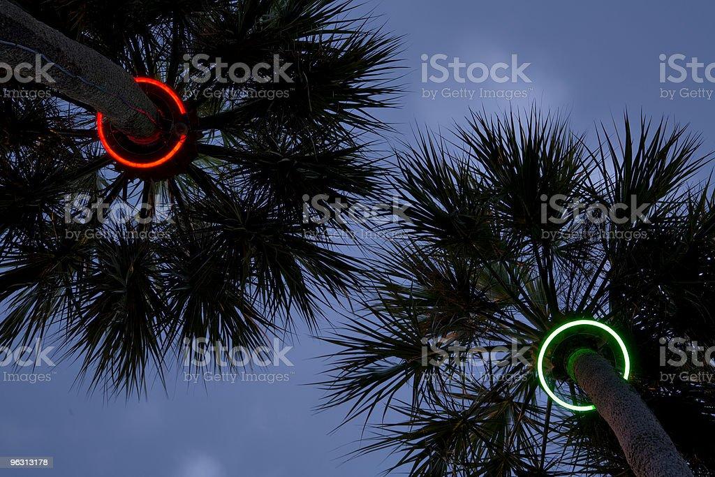 palm symmetry (XL) stock photo