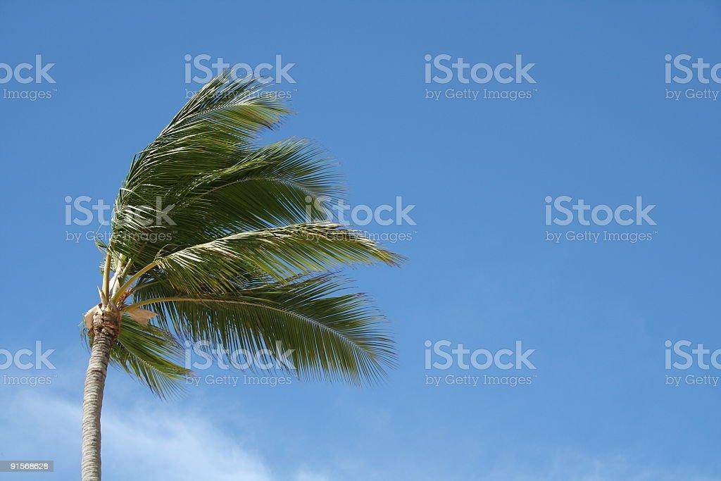 Palm tree against blue sky stock photo