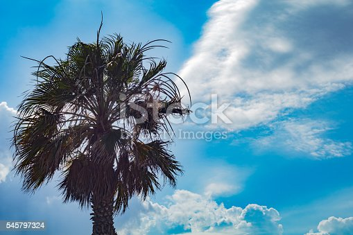 1145102719istockphoto Palm tree against sunny blue sky with clouds 545797324