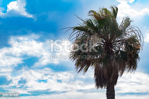 1145102719istockphoto Palm tree against sunny blue sky with clouds 545797432