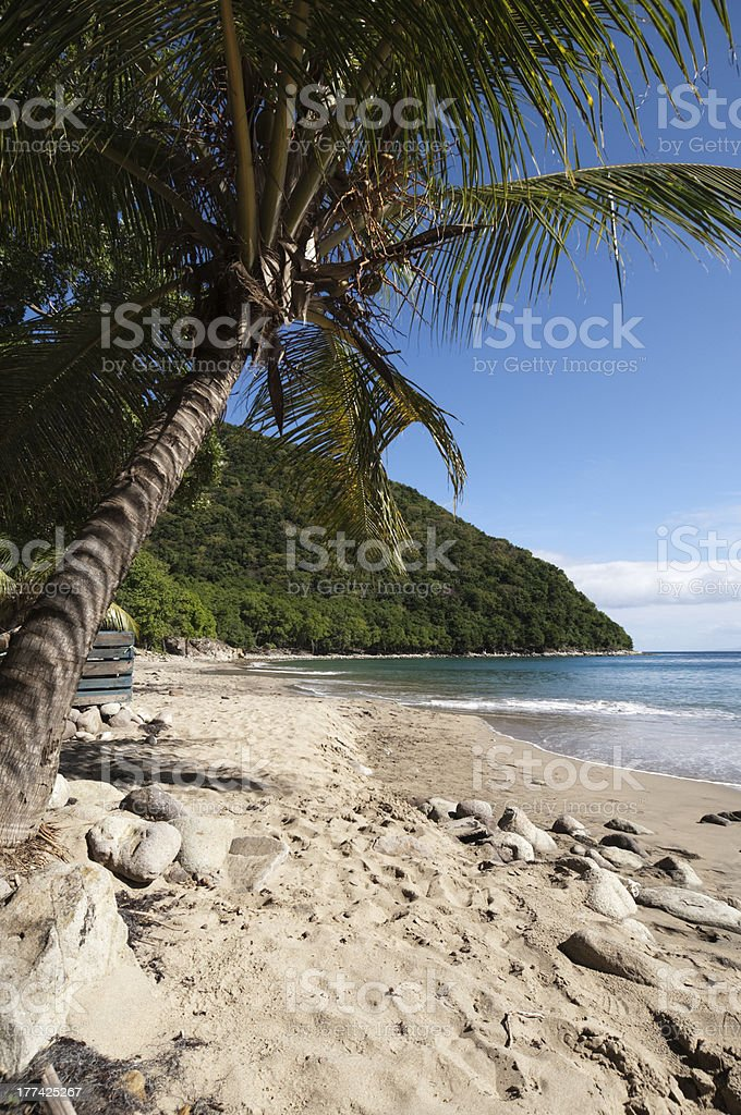 Palm tree and beach stock photo