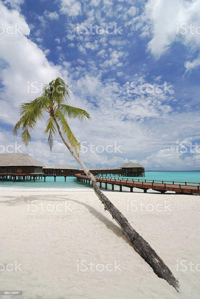 Palm Tree und Strand resort Lizenzfreies stock-foto