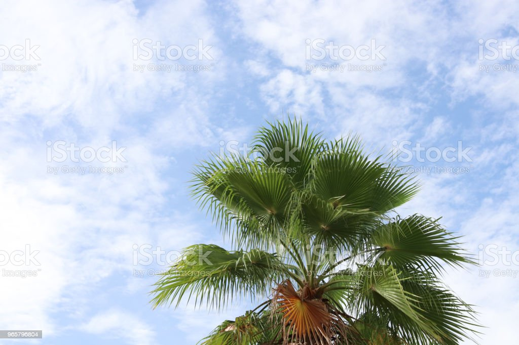 Palm tree and blue sky with white cloud background beautiful in nature summer season - Royalty-free Abstract Stock Photo