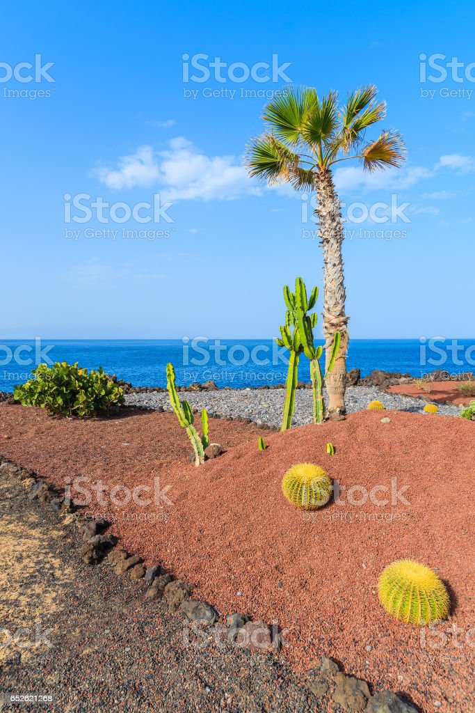 A palm tree and cacti plants against blue ocean on coastal promenade in San Juan town, Tenerife, Canary Islands, Spain stock photo