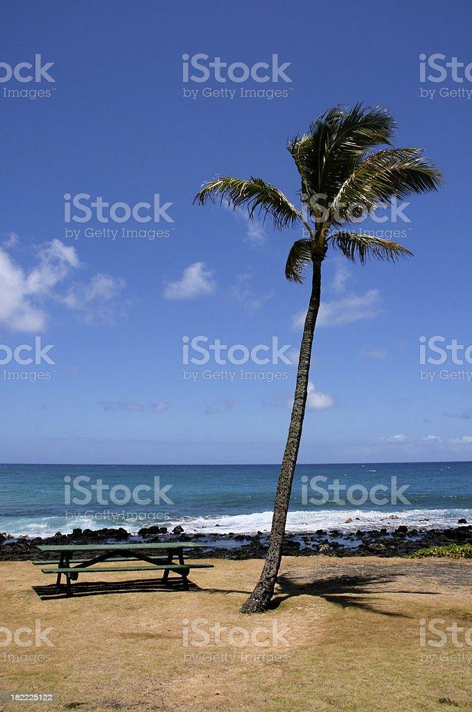 Palm Tree and empty park bench on Kauai, Hawaii stock photo