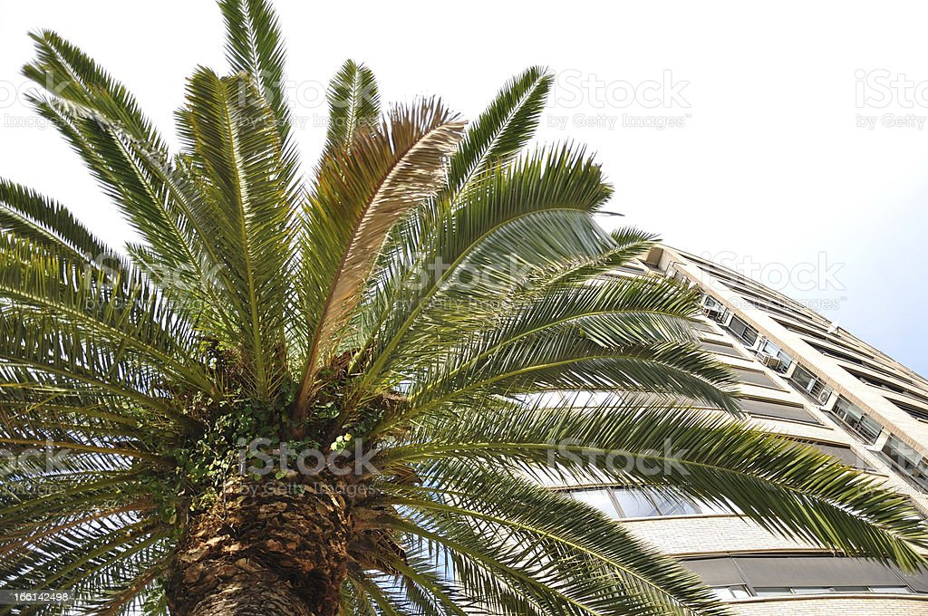 Palm tree and house royalty-free stock photo