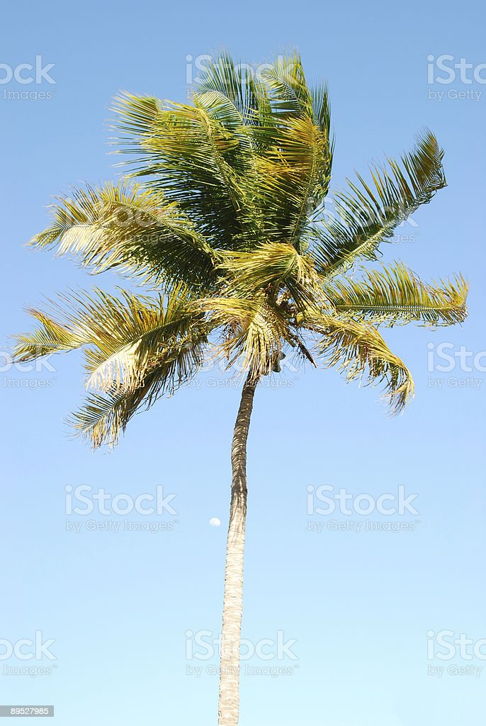 Palm tree and moon 免版稅 stock photo