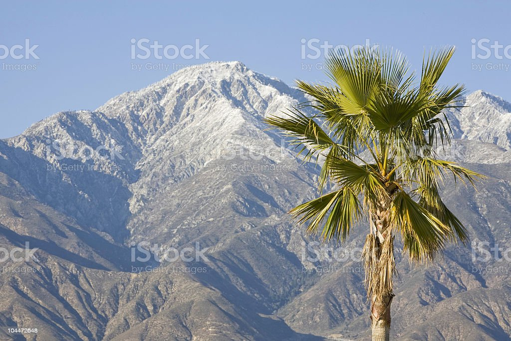 Palm Tree and Mountain royalty-free stock photo