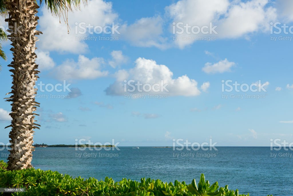 Palm tree and ocean background in Caribbean stock photo