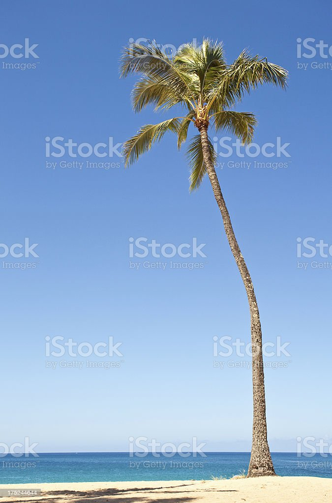 Palm Tree and Ocean royalty-free stock photo