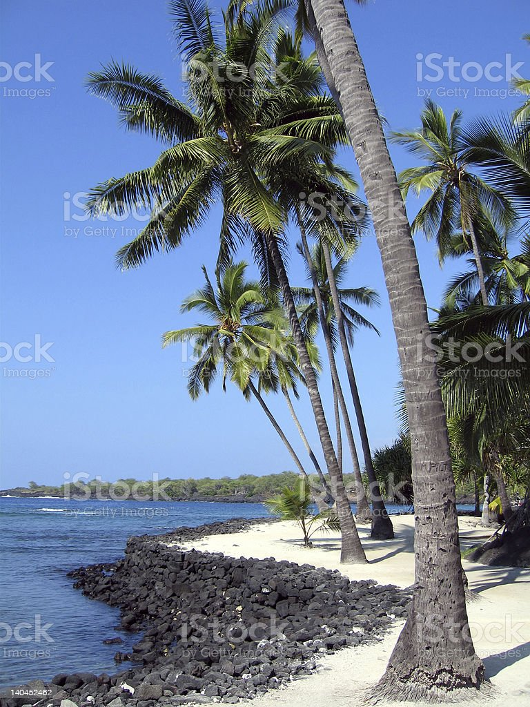 Palm Tree and Ocean, Place of refuge stock photo