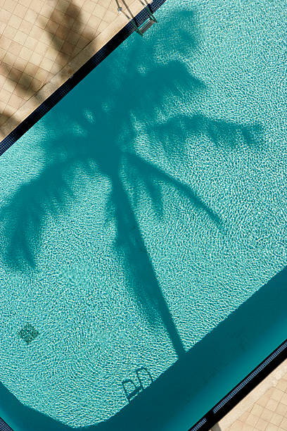 palm tree and pool birds eye view stock photo