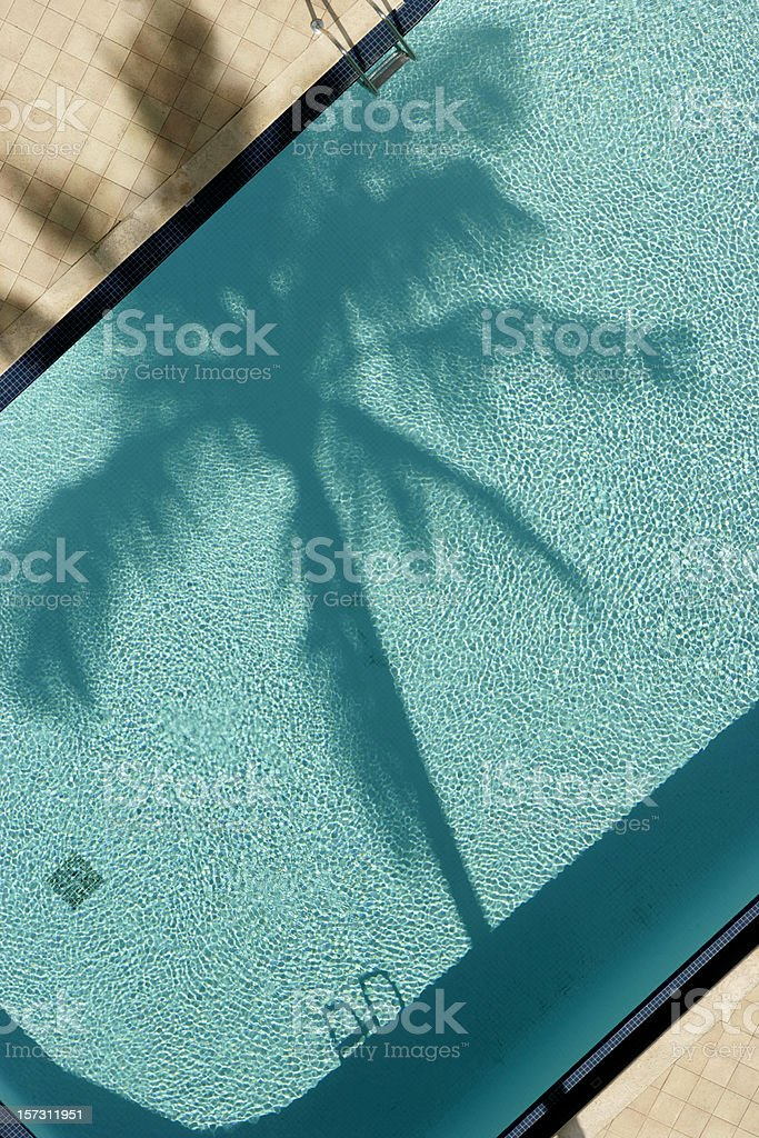 ... Palm Tree And Pool, Birds Eye View. Stock Photo ...