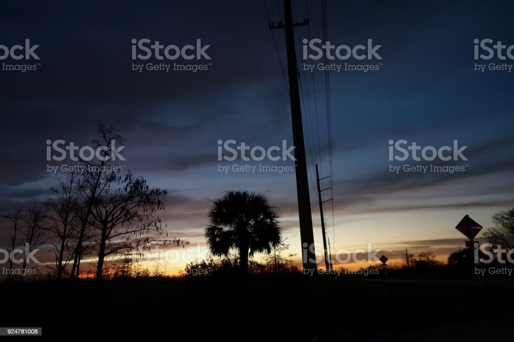 palm tree and power lines at sunset stock photo