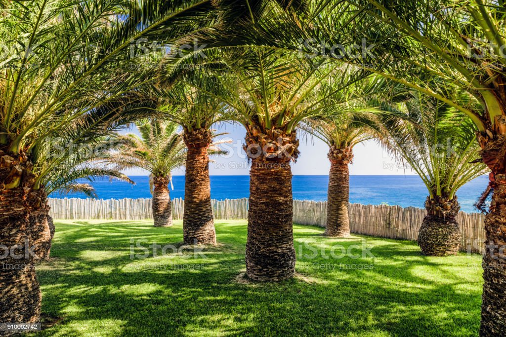 Palm tree and sea stock photo