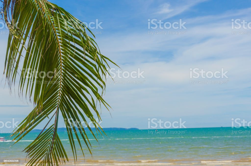 palm tree and sea - Royalty-free Abstract Stock Photo
