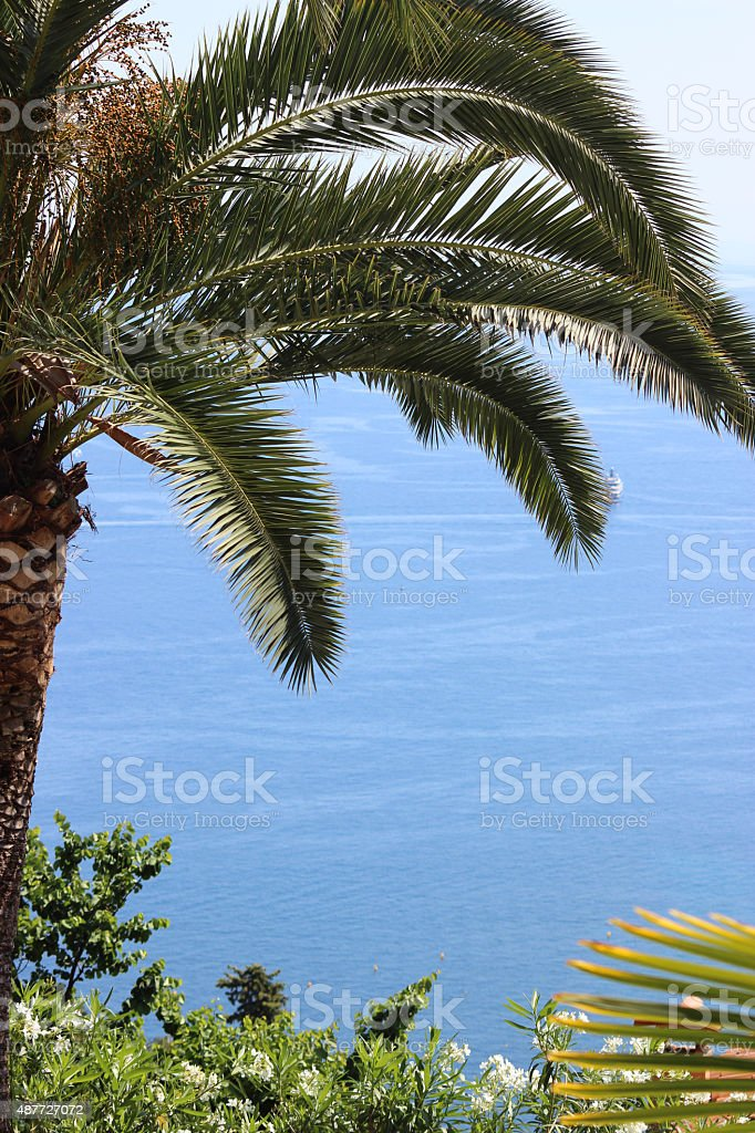 Palm tree and Sea View stock photo