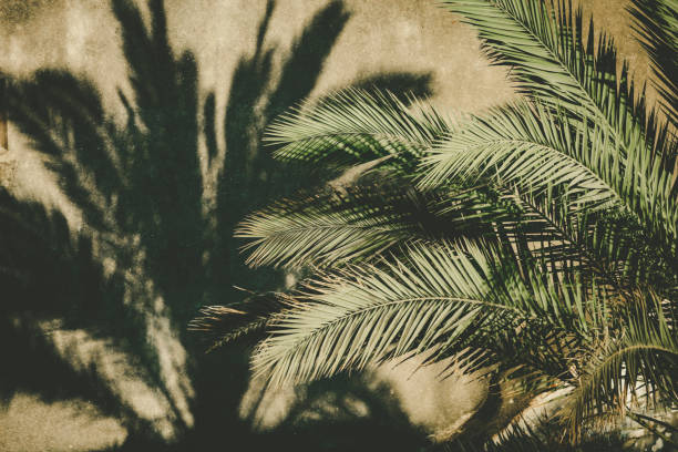palm tree and shadow stock photo
