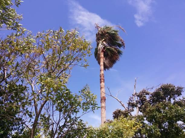 ヤシの木と夏は太陽青空です。 ストックフォト