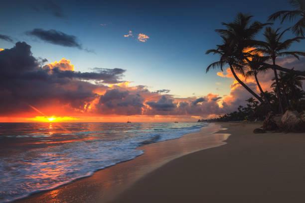 Palmenbaum und tropischer Strand bei Sonnenaufgang – Foto