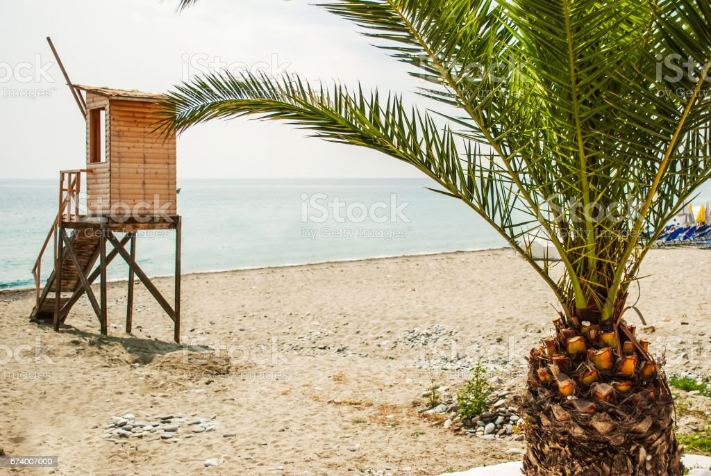 Palm tree and view of the beach royalty-free stock photo