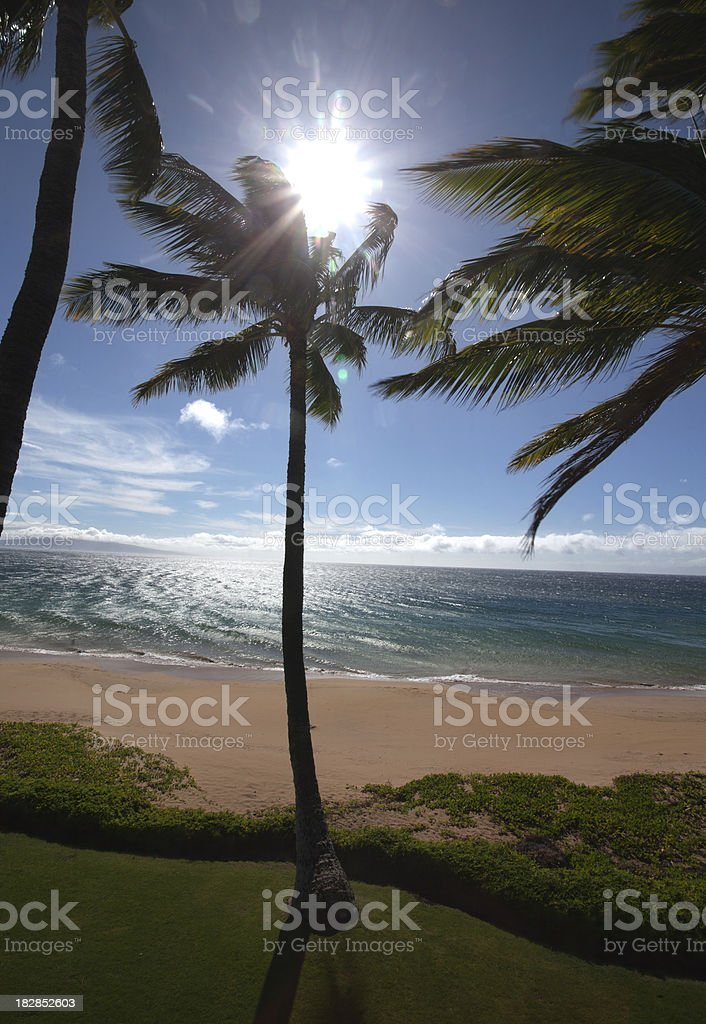 Palm Tree and Windblown Ocean Beach stock photo