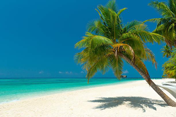 palm tree at a beautiful unspoilt beach stock photo