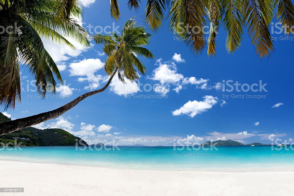 palm tree at Cane Garden Bay, Tortola, British Virgin Islands stock photo
